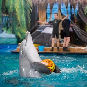 Дельфинарии, океанариумы Нововоронежа