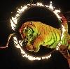Цирки в Нововоронеже