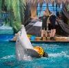 Дельфинарии, океанариумы в Нововоронеже